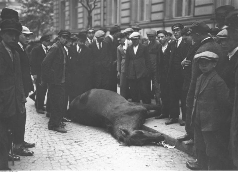 Na skraju brukowanej ulicy, głową w stronę fotografa, leży ciało martwego konia, z nogami już na chodniku. Z trzech stron otoczone jest przez grupę gapiów: mężczyzn i chłopców.