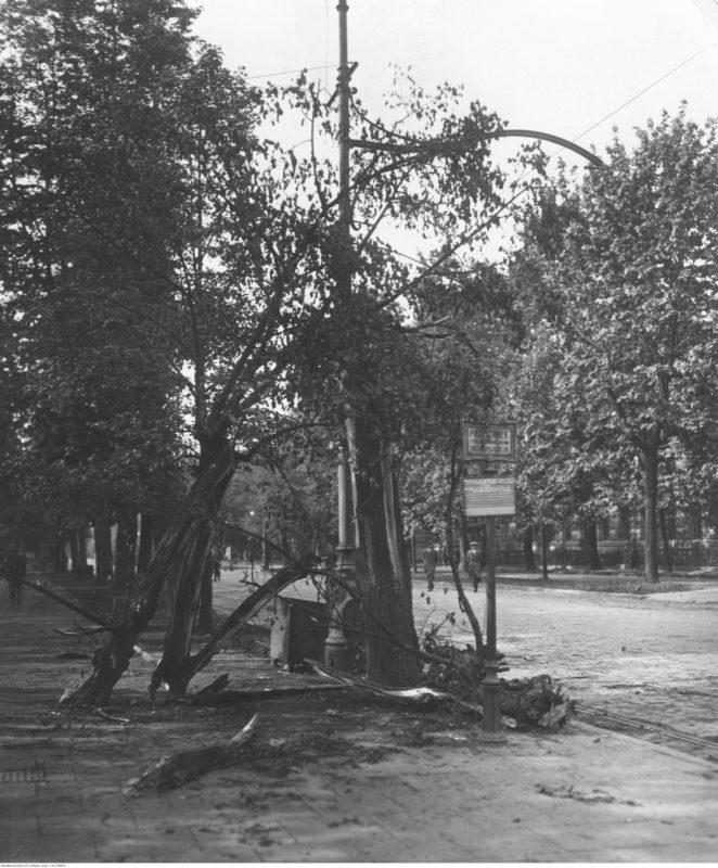 Roztrzaskane drzewa przydrożne na jednej z ulic.