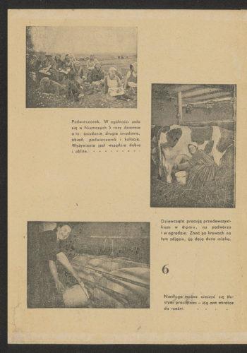 """Dalsza część ulotki. Nagłówek """"[Robotnicy rolni] przy pracy"""" oraz zdjęcia z podpisami: """"Podwieczorek. W ogólności jada się w Niemczech 5 razy dziennie a to: śniadanie, drugie śniadanie, obiad, podwieczorek i kolację. Wyżywienie jest wszędzie dobre i obfite""""; """"Dziewczęta pracują przedewszystkiem w domu, na podwórzu i w ogrodzie. Znać po krowach na tym zdjęciu, że dają dużo mleka""""; """"Niedługo można cieszyć się tłustymi prosiętami – idą one wkrótce do rzeźni""""."""