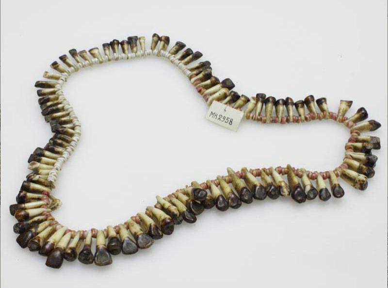 Naszyjnik z zębów ludzkich z zabarwionymi na czarno koronami. Zęby nawleczone na sznur, poprzedzielane 3-4 białymi lub różowymi koralikami wykonanymi z muszli.